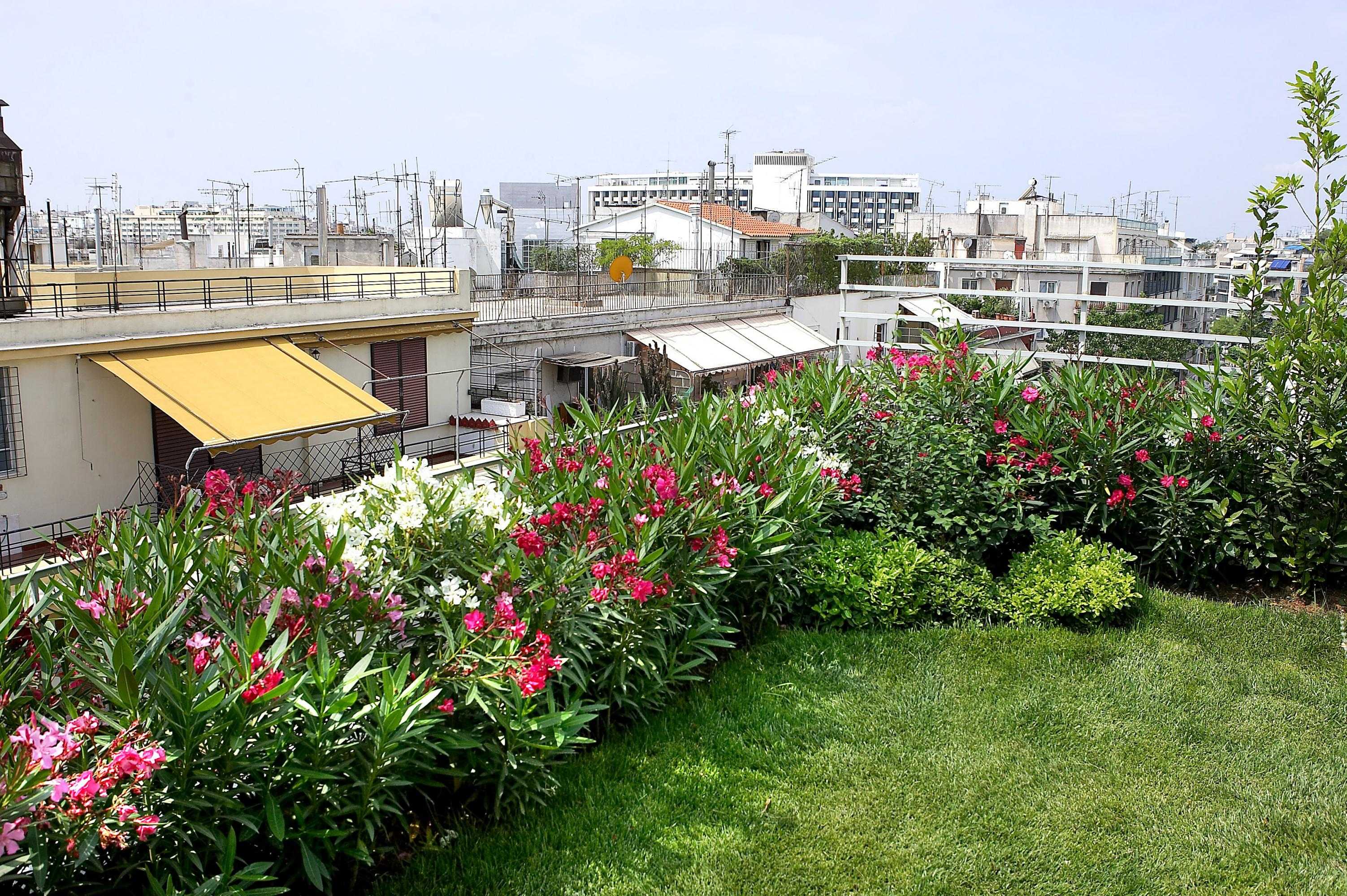 Roof garden with lawn and Oleander