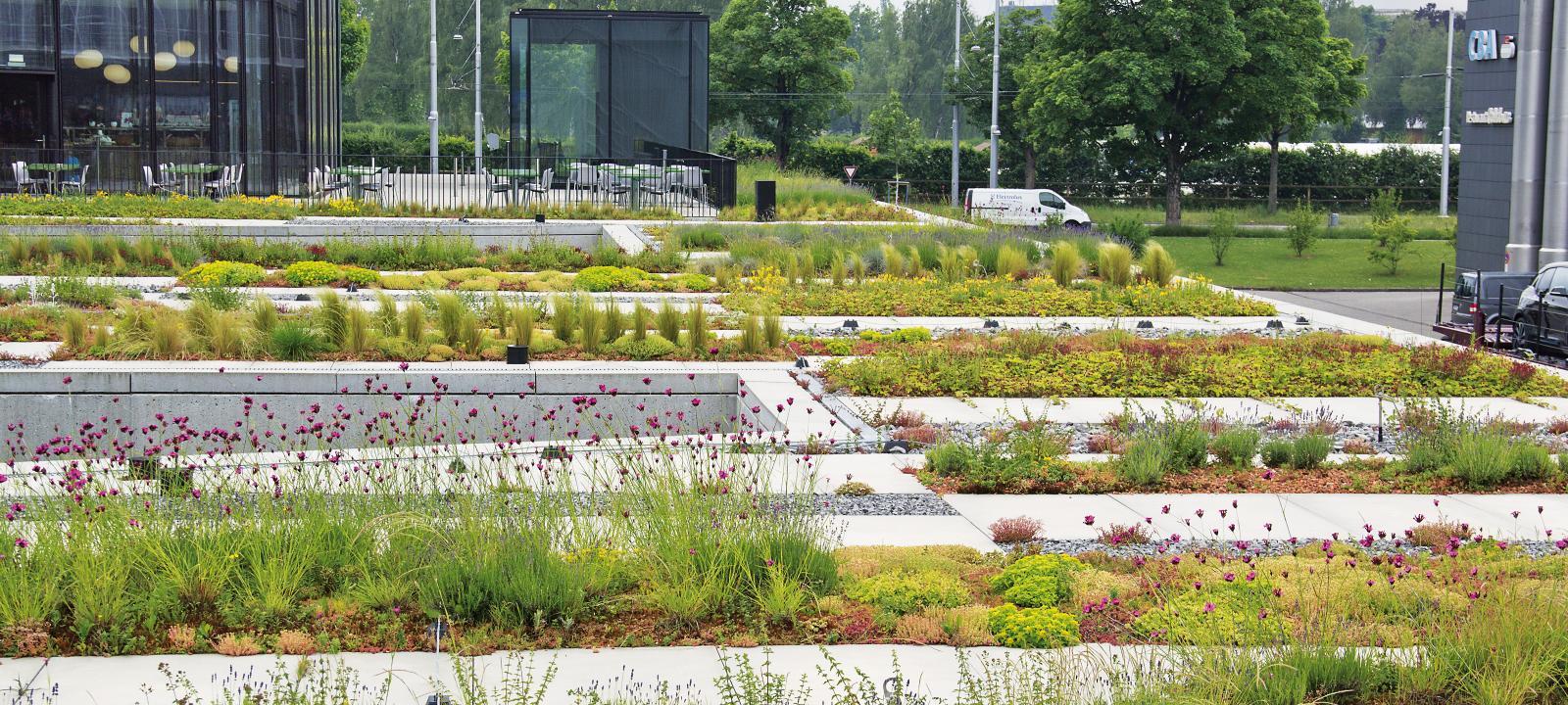 Ornamental Sedum Zinco Green Roof Systems Usa