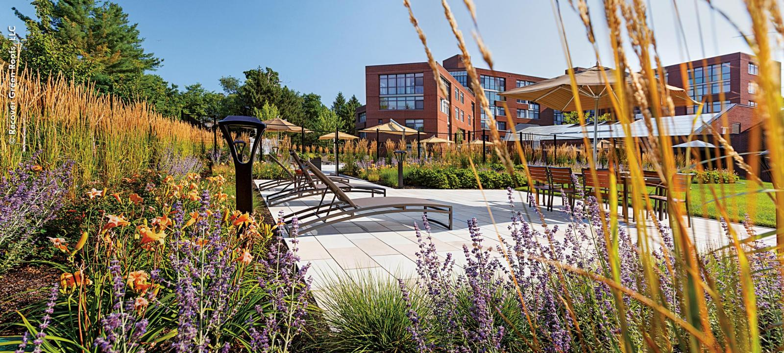 Roof garden with deckchairs, perennials, ornamental grasses