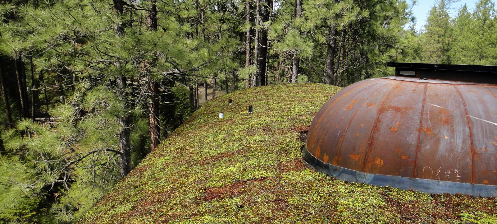 Sloped green roof surrounded by trees