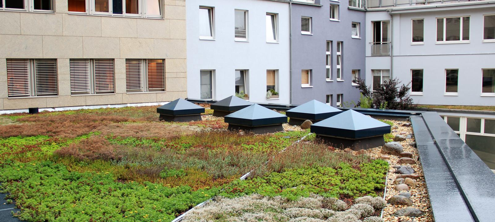 Green roof during rainfall