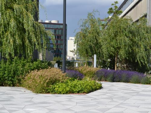 Pathways and plant beds with lush vegetation