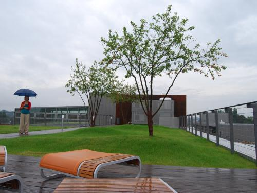 Woman with an umbrella in the rain on a green roof