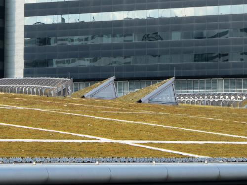Green roof with skylights and photovoltaics