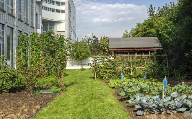Roof garden with vegetable patches, lawn and a wooden shed