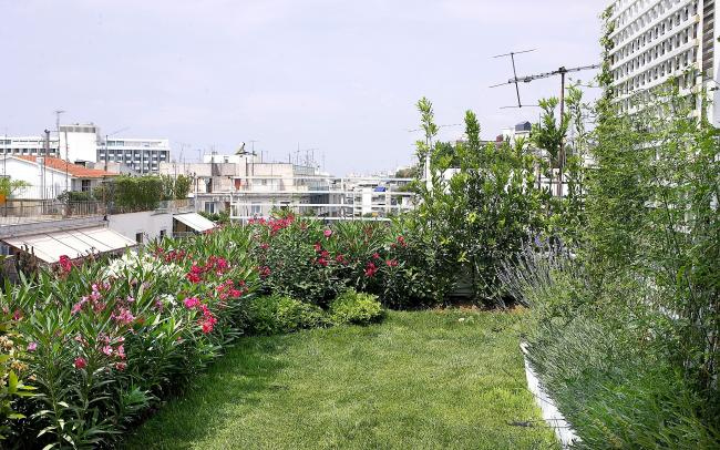 Roof garden with lawn, lavender and Oleander