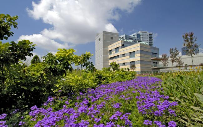 Roof garden with purple flowers, bushes and trees