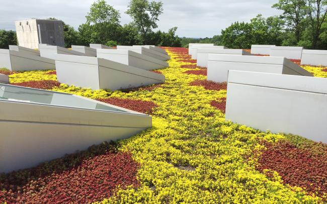 Green roof with Sedum and skylights