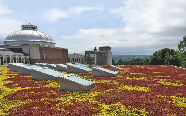 Sedum roof with skylights