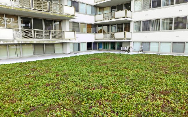 Sedum roof surrounded by condominiums